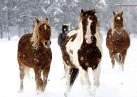 Horses snow