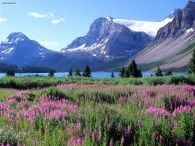 Bow_Lake_Canadian_Rockies_Alberta