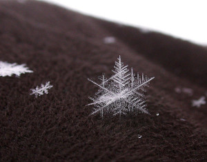 Snowflake-Close-up