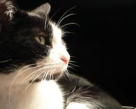 Black_and_white_cat_named_Leafy-zenera-03