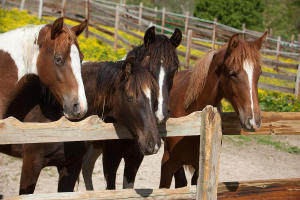 horses-behind-a-fence-scott-sanders